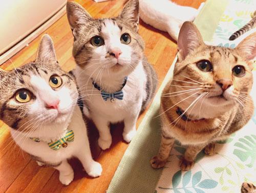 見上げる3匹の猫ちゃん