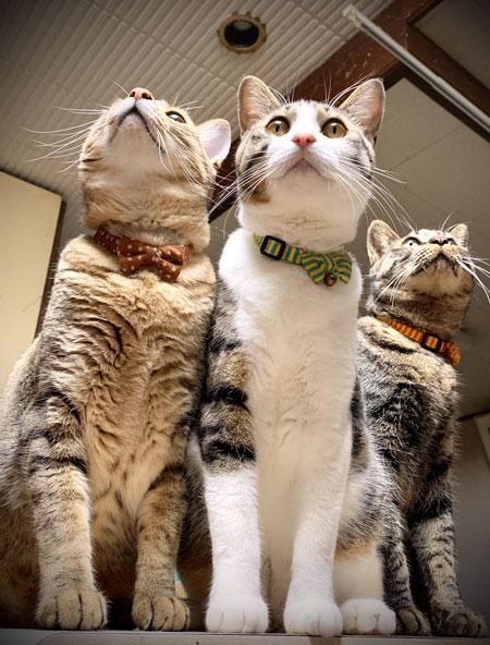 3匹とトンボ