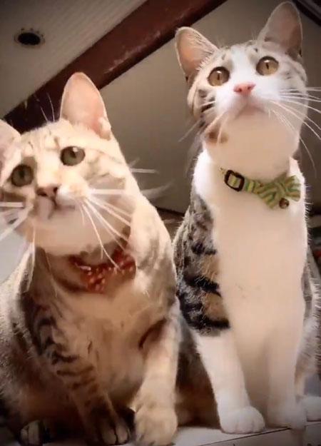 トンボ動画正面を向く猫ちゃん