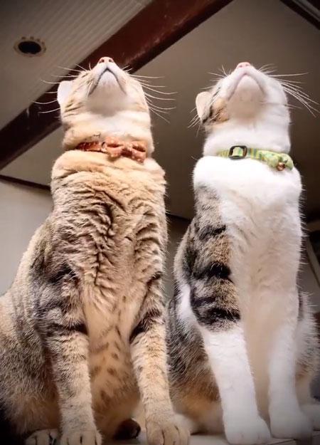 トンボ動画上を見る猫ちゃん
