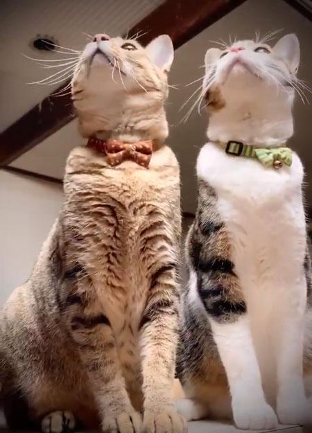 トンボ動画左上を見る猫ちゃん
