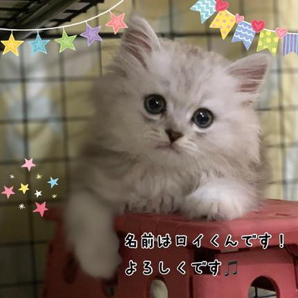 ロイくんご紹介