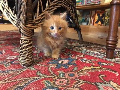 子猫がいる本屋さん