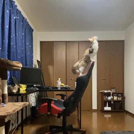 気高い猫ちゃん