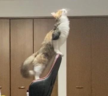 気高い猫ちゃんアップ