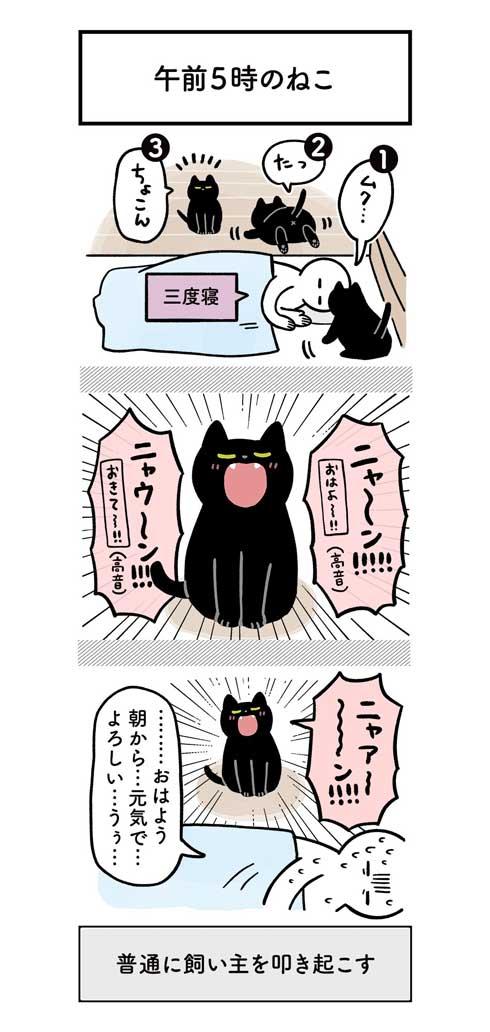 黒猫 ろん 猫と一緒に寝る おもしろくて最高 漫画