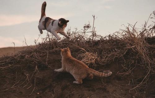 猫から目線