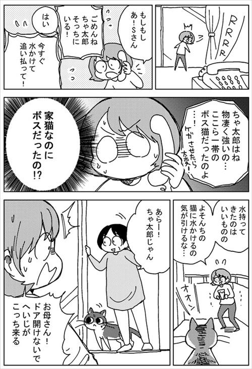 ボス猫・ちゃ太郎くん襲来