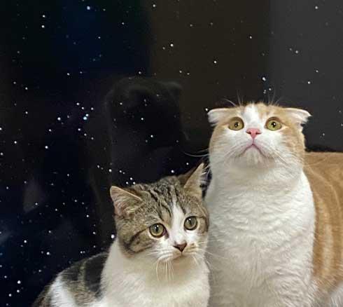 猫 テレビを宇宙に スペースキャット