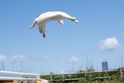 躍動感のある白猫ちゃん