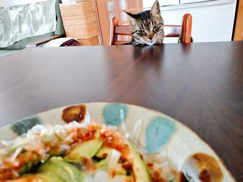 お昼を狙うサンゴさん