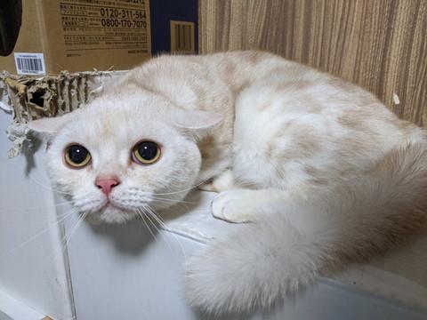 ビビった猫