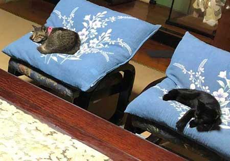 猫 幹部会議 椅子 寝る 家族