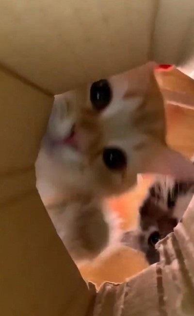 ちゅ〜るを狙う猫ちゃんたち