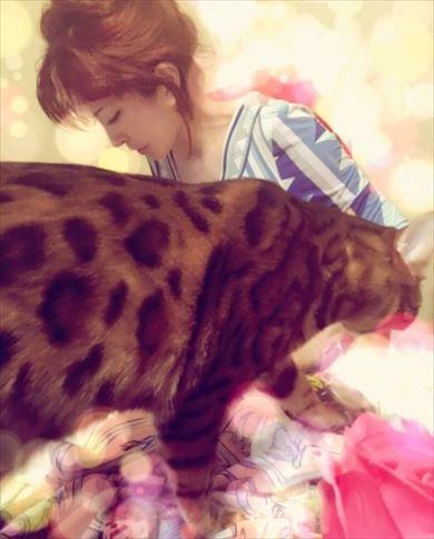 叶姉妹 ベンガルキャット ファビュラス君 猫 ペット 叶美香 叶恭子