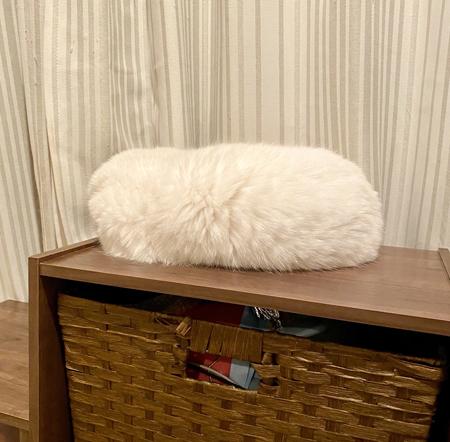 シャリみたいな白猫