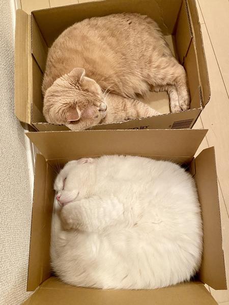 箱入り2匹