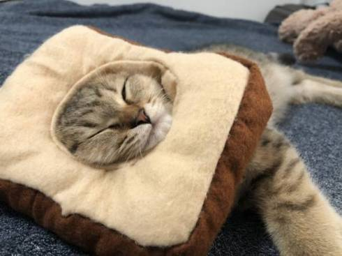 みにら君 みにら日記 フトン 猫