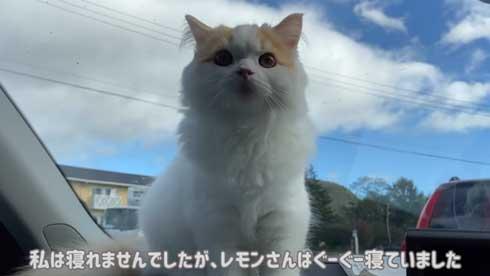 猫 台風 19号 ペット 車 避難 車中泊 レモン