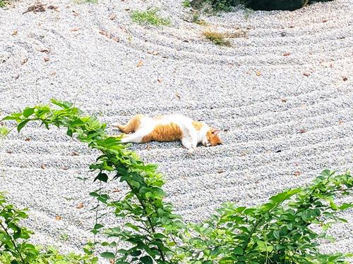 枯山水猫アップ