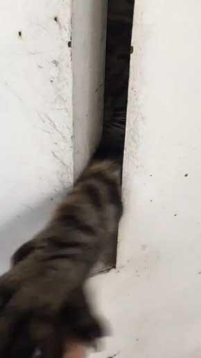 猫がいて入れられなかった 配達員 郵便受け