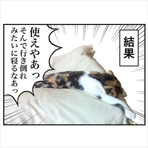 意味不明な行動をする猫ちゃん