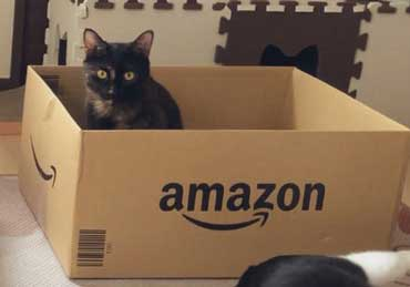 猫 Amazon ダンボール 好きな箱選んで 好み 大中小