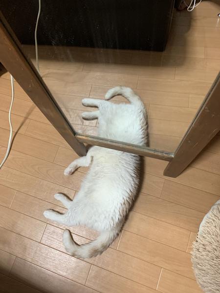クリーチャー猫ちゃん