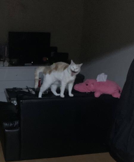 化け猫風味猫ちゃん