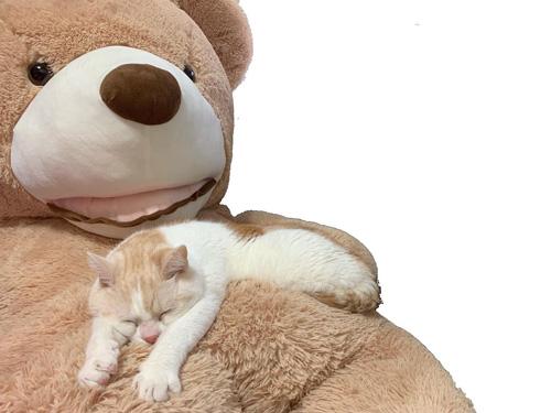 くまと猫ちゃん