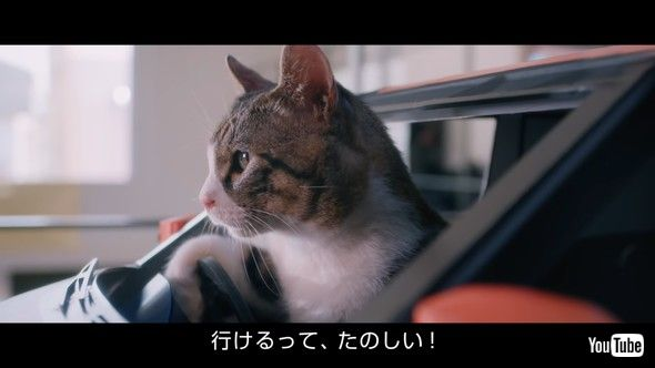 日産 デイズ 猫