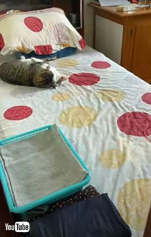 猫カップル