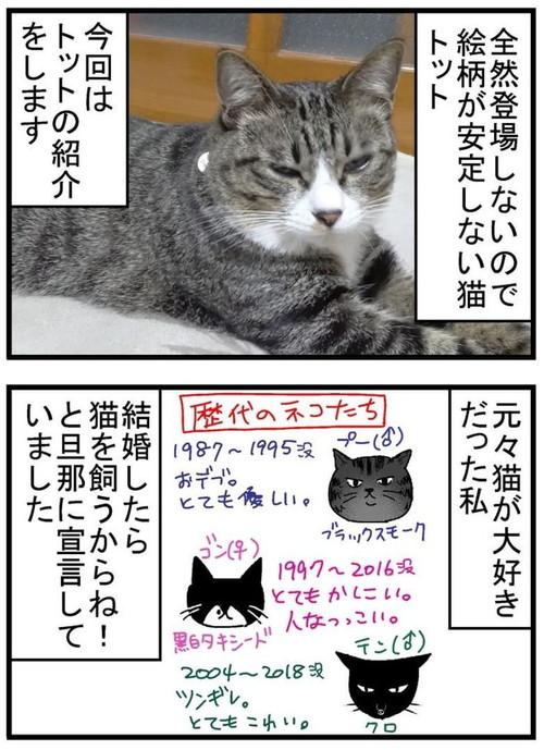 トット(猫)が我が家に来た時の話