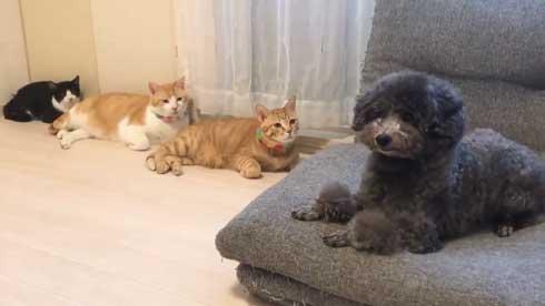 犬 ワンコ 二度見 猫 3匹 並ぶ 視線