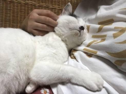 猫 おキャット様 軍手と寝る