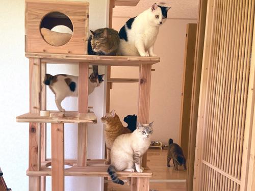 猫ちゃん勢ぞろい