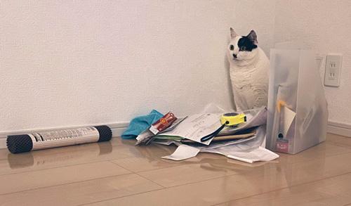 置物猫ちゃんややアップ