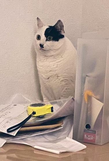 置物猫ちゃんドアップ