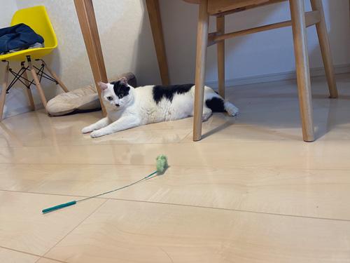 床に伏せる猫ちゃん