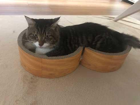 猫 ヤマダ 腕 ハグ 抱きしめ 季節