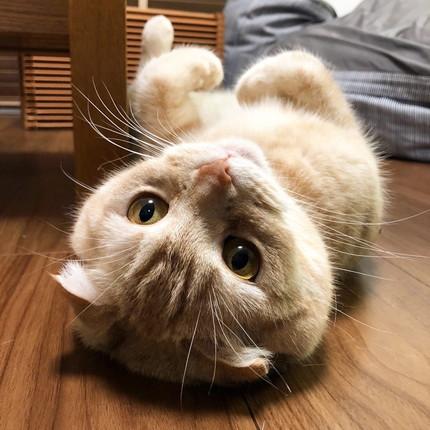 細長い箱でくつろぐネコちゃん