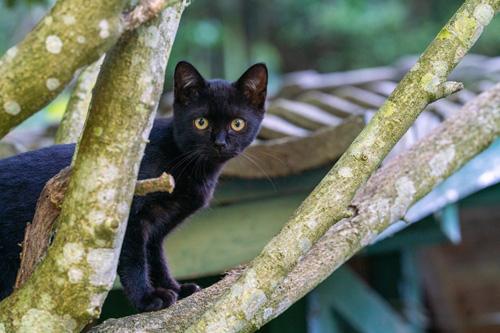 かくれんぼする黒猫ちゃん