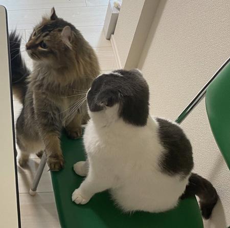 web会議出るつもり猫ちゃんアップ