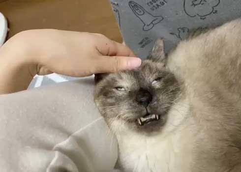 猫 寝顔 ブス 飼い主 吹き出す 表情 かわいい