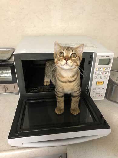 冷蔵庫 お酒 卵 猫 入っちゃう いたずら 猫の卵とじ丼