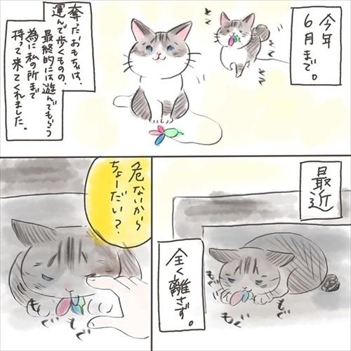 突然かみつく猫ちゃん