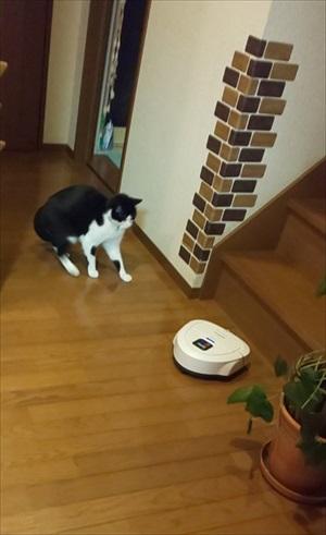 猫が来ます
