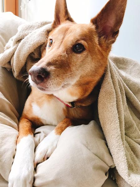 毛布を背中にかけた宮田さん
