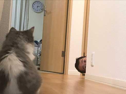 困らせたい 旦那 困る猫 顔 遊び 飼い主 目だけ