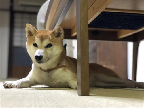 犬の喜びバイブレーション